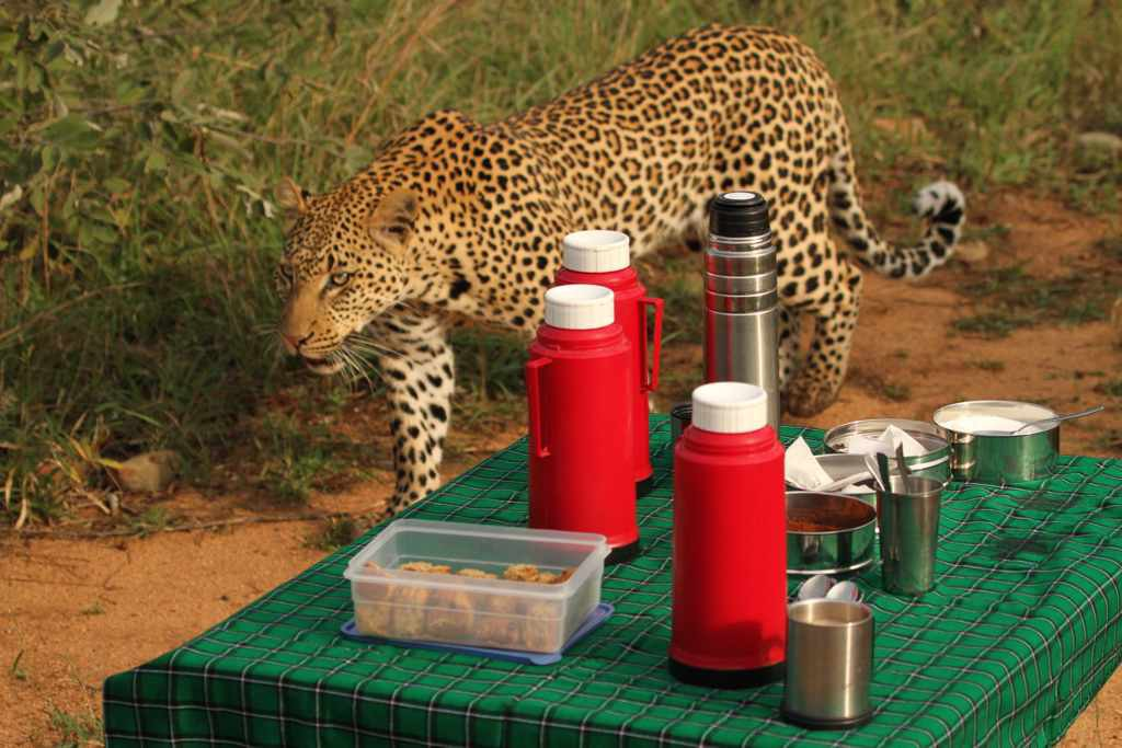 Rockfig Safari Lodge Leopard