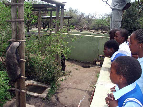 Recent Happenings With The Timbavati Foundation