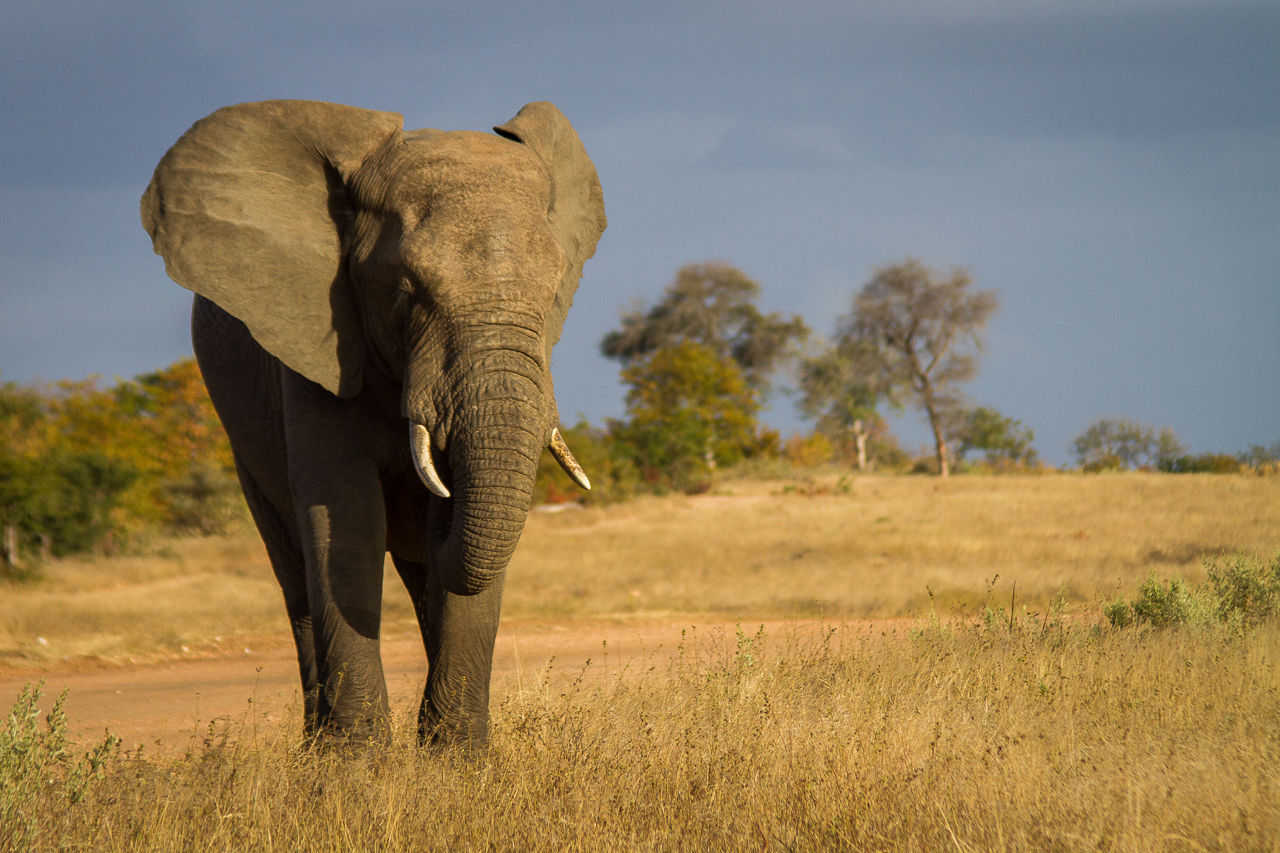 The Timbavati And Kruger National Park – And Why Timbavati Has The Edge