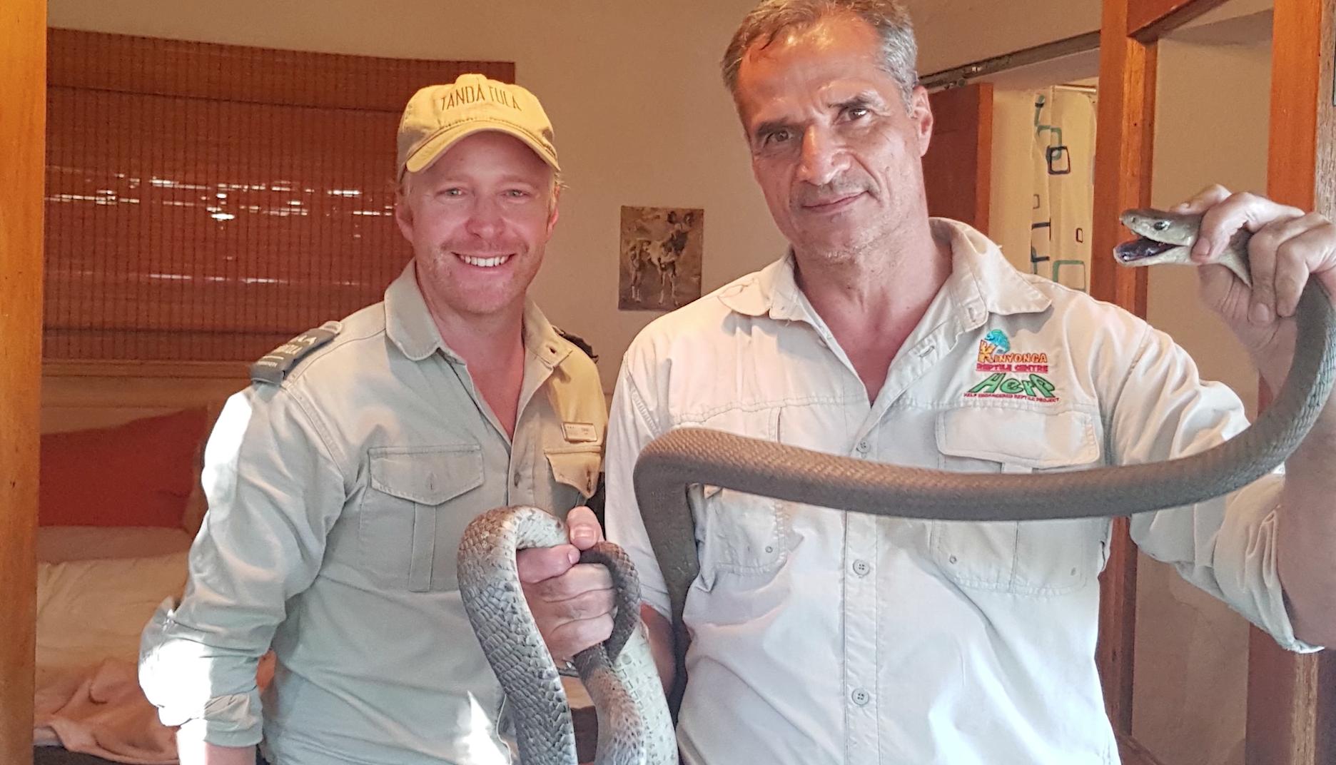 Black Mamba Surprise At Tanda Tula Safari Camp