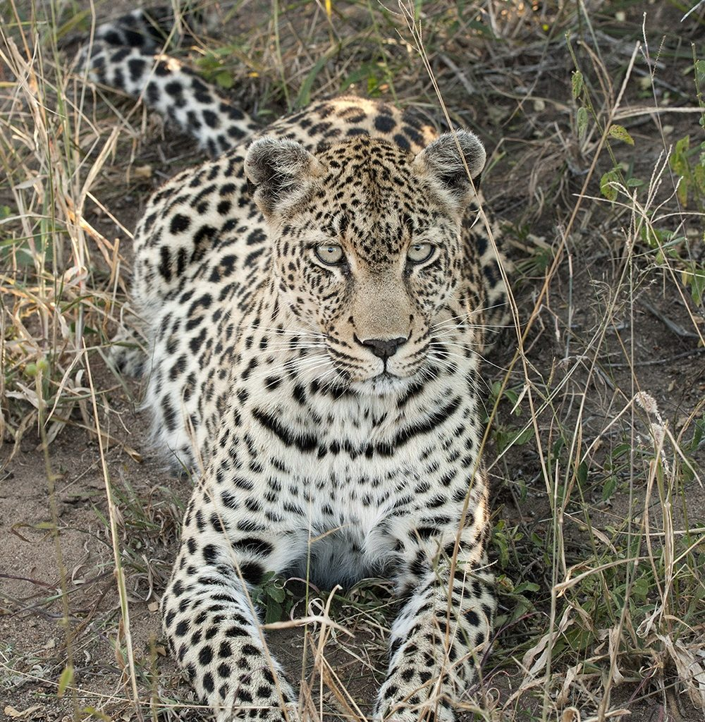 A Heavily Pregnant Nthombi Relaxes