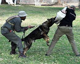 Mike The Anti-poaching Dog