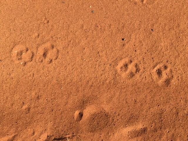 Civet Tracks