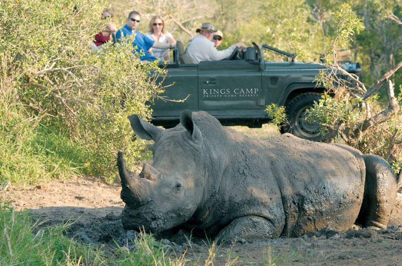 Luxurious Safari Rhino