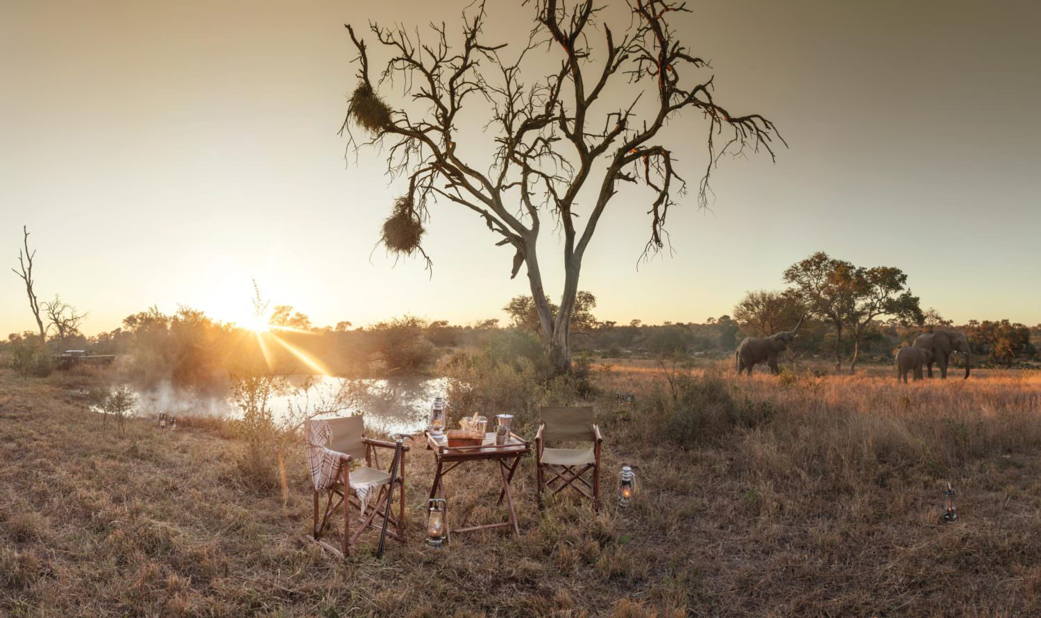 Explore The Timbavati Wilderness With Choice Experiences At Kings Camp