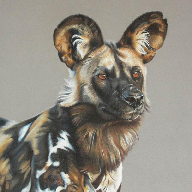 Coloured Hyena