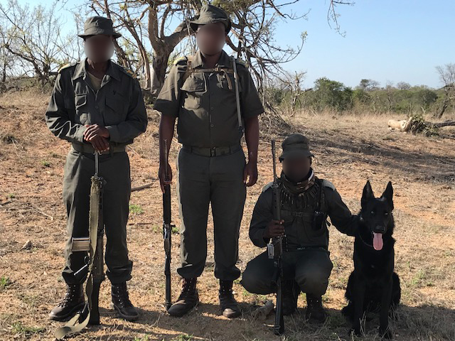 Guest Blog: Dodging Bullets, Mambas And Lions; It's All In A Day's Work For Canine Ranger Akhal
