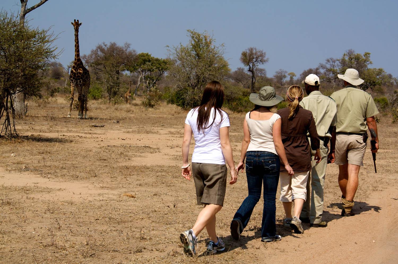 Walking Safari Medium